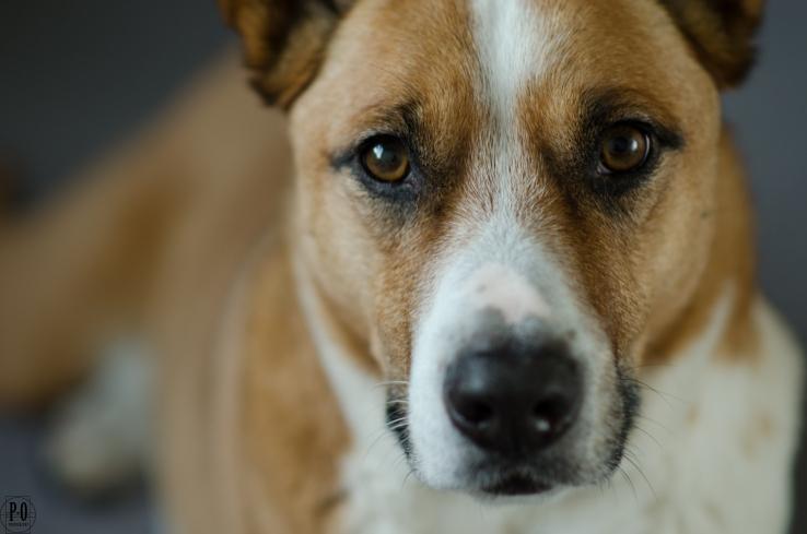 photo of dog