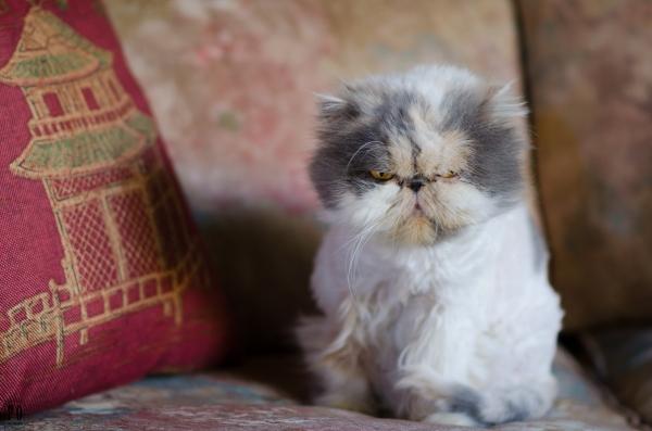 Precious the cat now