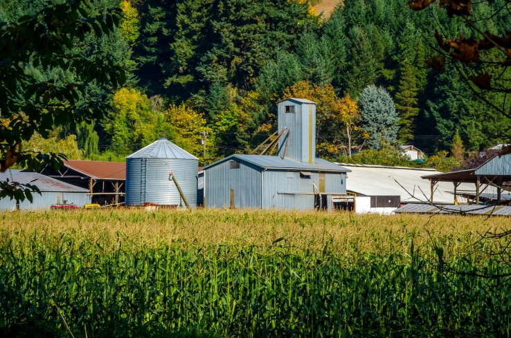 photo of silo and farm near a corn field in Banks, Oregon