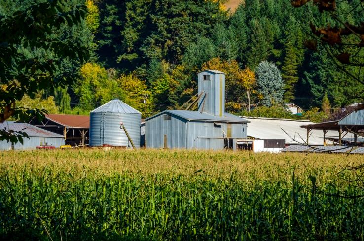 photo of silo and farm near a corn field in Banks, Oregon