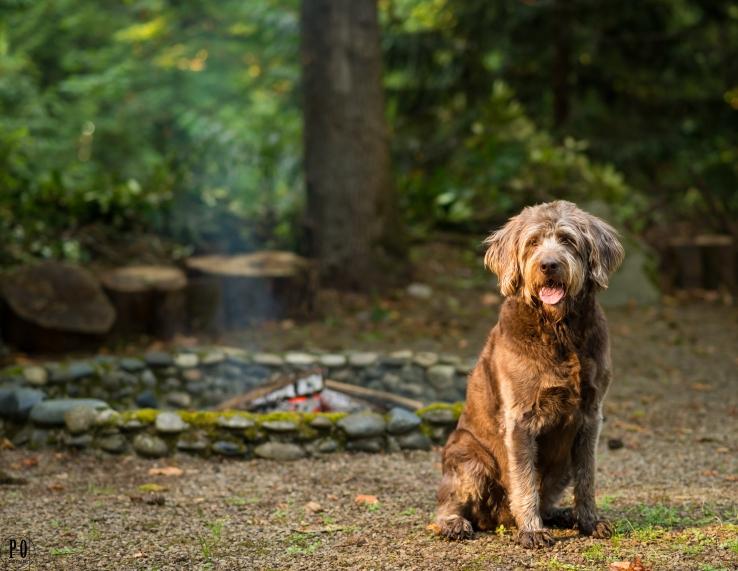 dog portraits Portland Oregon