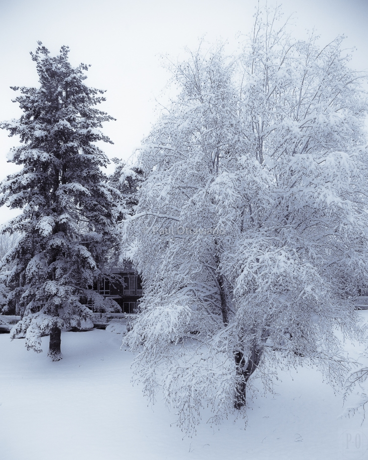 Oregon winter snow storm photo